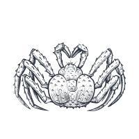 Araignée de mer «moussette»